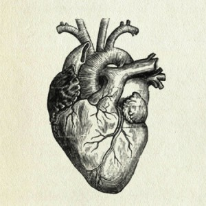 Human Heart